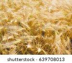 a barley corn field in germany... | Shutterstock . vector #639708013