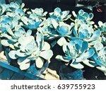 blue succulent in pots on shop...   Shutterstock . vector #639755923