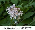 flower in bloom in the garden... | Shutterstock . vector #639759757