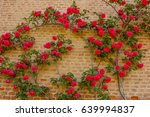 Stock photo an explosion of blooming coloured roses a roses climb on a brick wall sus 639994837
