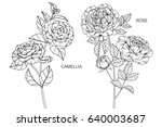 english roses and camellia... | Shutterstock .eps vector #640003687