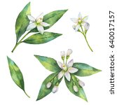 watercolor hand painted set of... | Shutterstock . vector #640017157