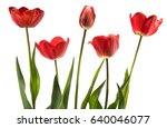 set of five red color tulips... | Shutterstock . vector #640046077