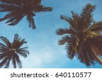 palm trees | Shutterstock . vector #640110577