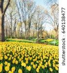 Lisse  Netherlands   April 30 ...