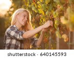 woman picking grape during wine ... | Shutterstock . vector #640145593