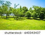 tree | Shutterstock . vector #640343437