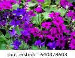 Blue Purple Flower In Flower...