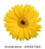 yellow gerbera  isolated on... | Shutterstock . vector #640467283