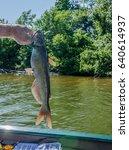 fisherman holding fresh caught...   Shutterstock . vector #640614937