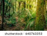 lush green foliage in tropical... | Shutterstock . vector #640763353