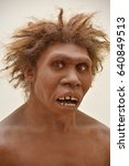 Small photo of Model of Homo Egaster with pronounced brow ridges and a distinctive African heritage