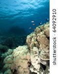 coral and fish in the red sea. | Shutterstock . vector #64092910