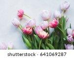 Pink Tulip. Tulips. Flower...