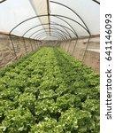 green hydroponic farm | Shutterstock . vector #641146093