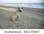 Thai Dog Sitting On Beach.