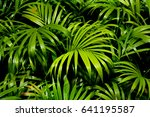 green palm leaves patterns in... | Shutterstock . vector #641195587