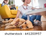 small yellow dog laying on the... | Shutterstock . vector #641203957