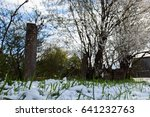 snow on grass at garden in may  | Shutterstock . vector #641232763