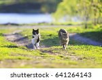 Pair Of Cute Funny Cats Fun...