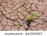 Small photo of Afforestation in the dry season