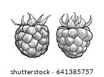 raspberry illustration  drawing ... | Shutterstock .eps vector #641385757