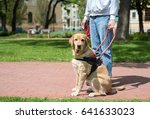 guide dog is helping a blind... | Shutterstock . vector #641633023