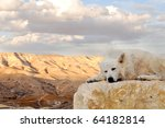 White Dog In Nature  On Stone