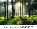 morning in the forest   Shutterstock . vector #641858893