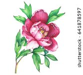 the branch flowering pink peony ... | Shutterstock . vector #641878597