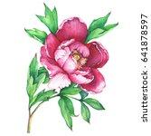 the branch flowering pink peony ...   Shutterstock . vector #641878597