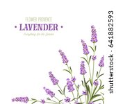 bunch of lavender flowers on a...   Shutterstock .eps vector #641882593