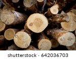 cut pine. logging. annual rings ...