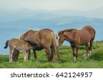 horses in a meadow. family with ... | Shutterstock . vector #642124957