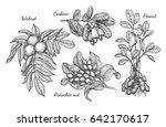 nuts set. ink sketch of plants. ... | Shutterstock .eps vector #642170617