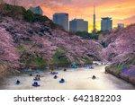 Cherry Blossom Or Sakura Japan...