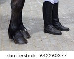 Black Hooves With Horseshoes...