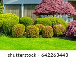 flowers  nicely trimmed bushes...   Shutterstock . vector #642263443