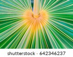 lines and textures of green... | Shutterstock . vector #642346237