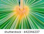 lines and textures of green... | Shutterstock . vector #642346237