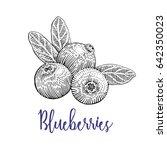 blueberries vector drawing.... | Shutterstock .eps vector #642350023