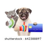 happy cat with euro and funny... | Shutterstock . vector #642388897