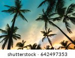 coconut palm trees and colorful ... | Shutterstock . vector #642497353