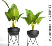 Small photo of 3D digital render of alocasia macrorrhiza isolated on white background