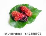 mulberry fruit mulberry... | Shutterstock . vector #642558973
