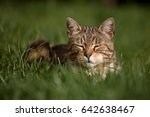 little cat laying and playing... | Shutterstock . vector #642638467