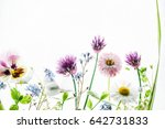 summer flowers | Shutterstock . vector #642731833