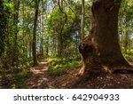 hiking path in tropical rain... | Shutterstock . vector #642904933