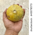 Small photo of A fruit of the aegle marmelos