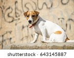 Dog Jack Russell Terrier Seate...